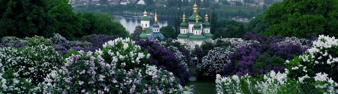 Photo courtesy M.M. Gryshko National Botanical Garden of NAS of Ukraine