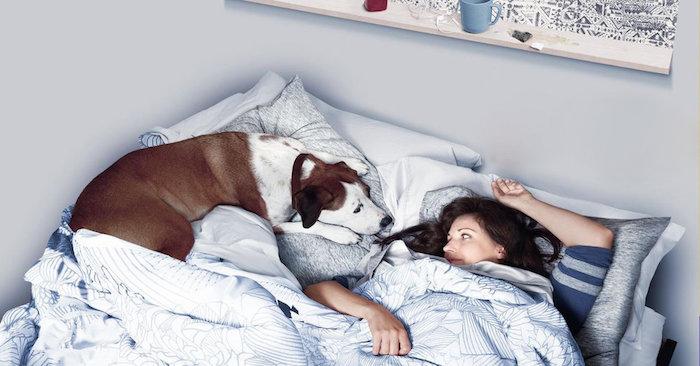 Downward Dog</br><em>ABC Series</em>|film vfx