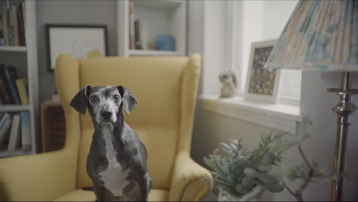 Grounds and Hounds</br><em>A Dog's Chance</em>|branded liveaction vfx