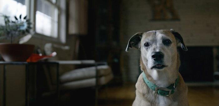 Downward Dog</br><em>Web Series</em>|film