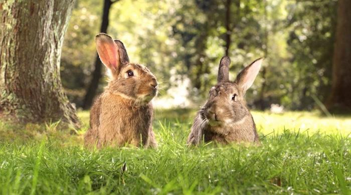 All-Bran</br><em>Rabbits</em>|vfx