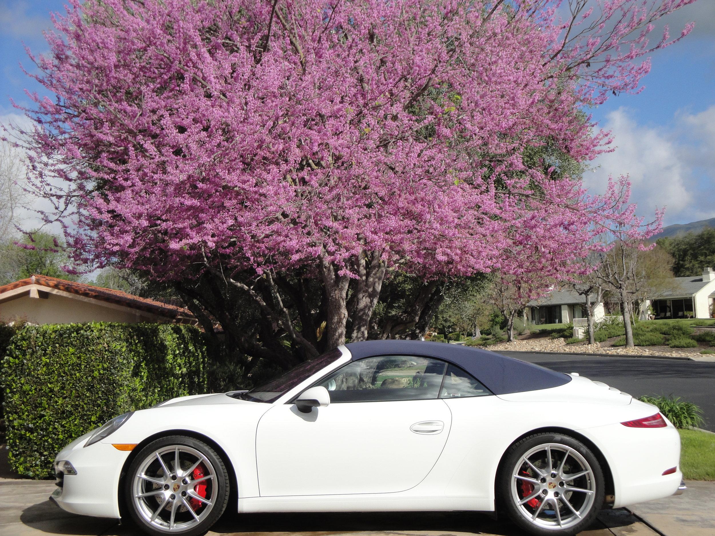 Springtime in Pauma Valley copy.jpg