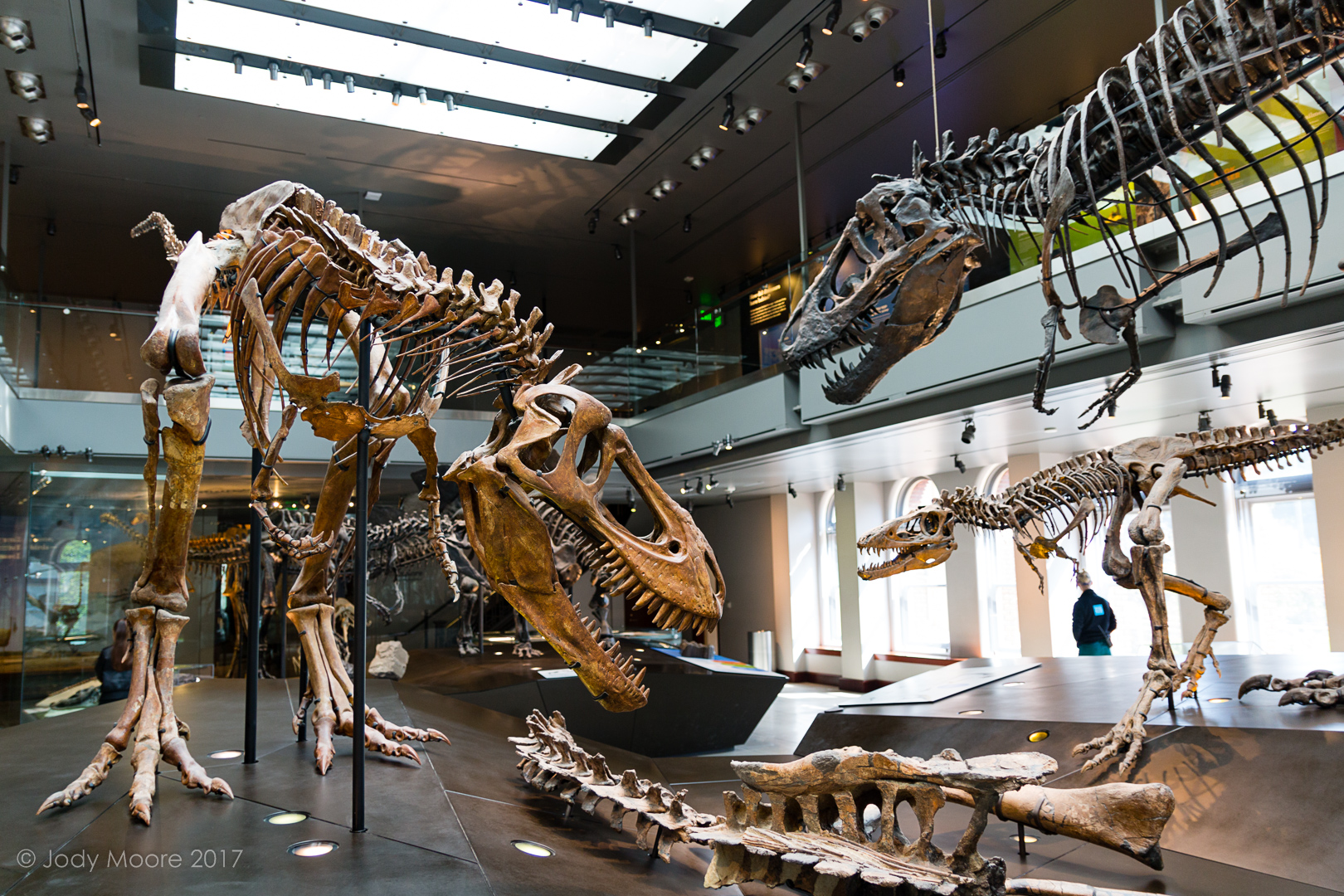 All three specimens in the T.rex Growth Series at the Los Angeles County Museum of Natural History.