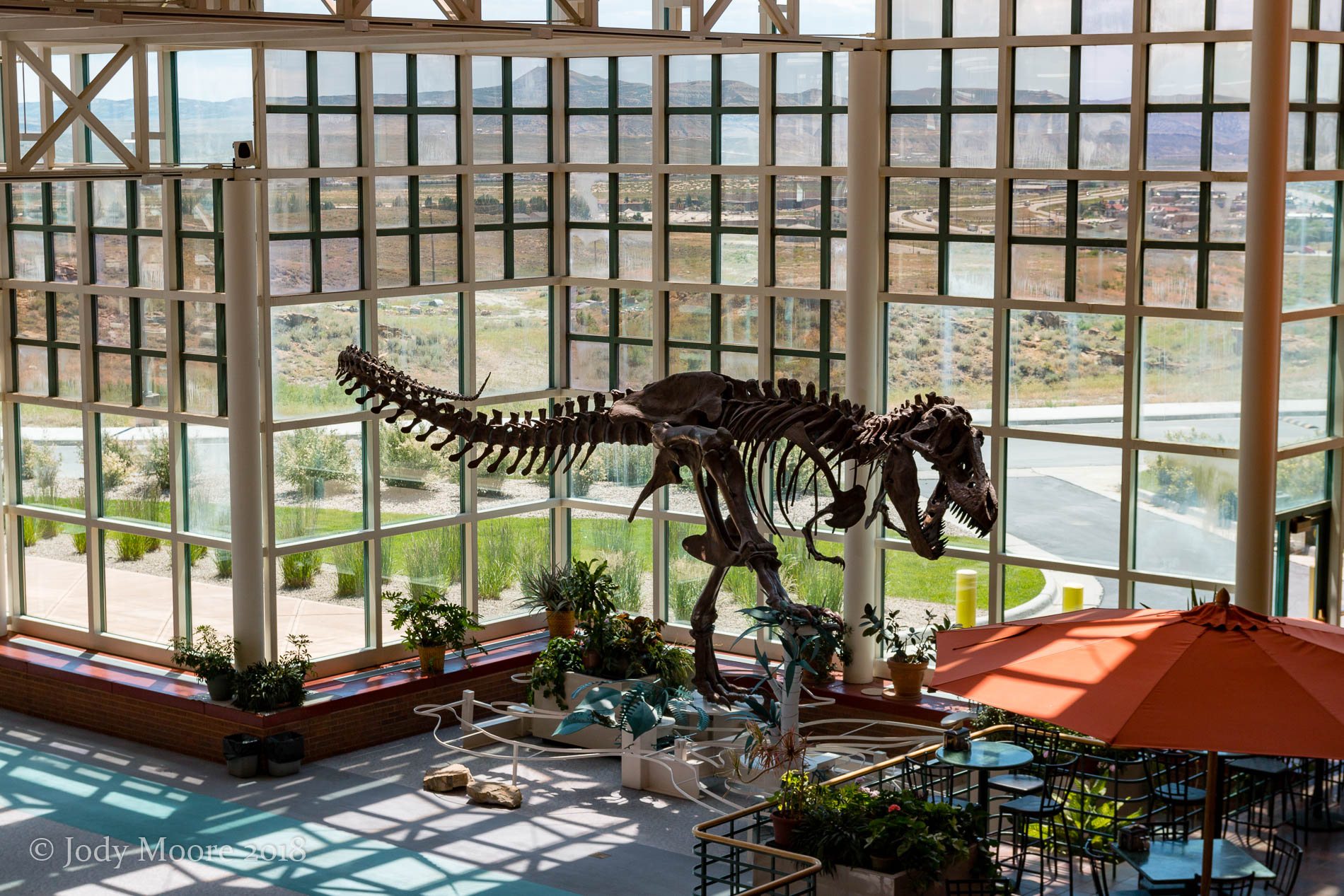 Cast of AMNH 5027 at Western Wyoming Community College in Rock Springs, WY. Even after years of dinosaur enthusiasm, I was in my early 30s before I saw this, my first Tyrannosaurus rex.