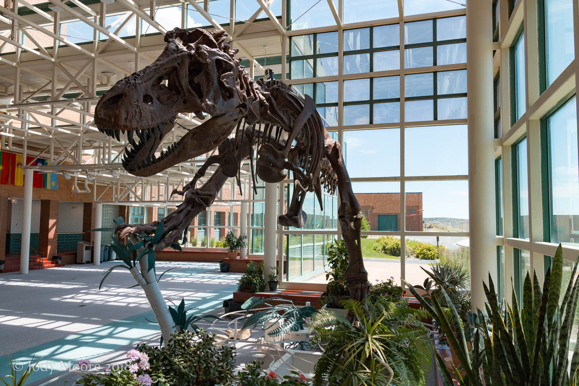 Another look at the cast of AMNH 5027 at WWCC in Rock Springs, WY. Though these photos are from last year, the cast provided my first exposure to T.rex, about 15 years prior to the photo.