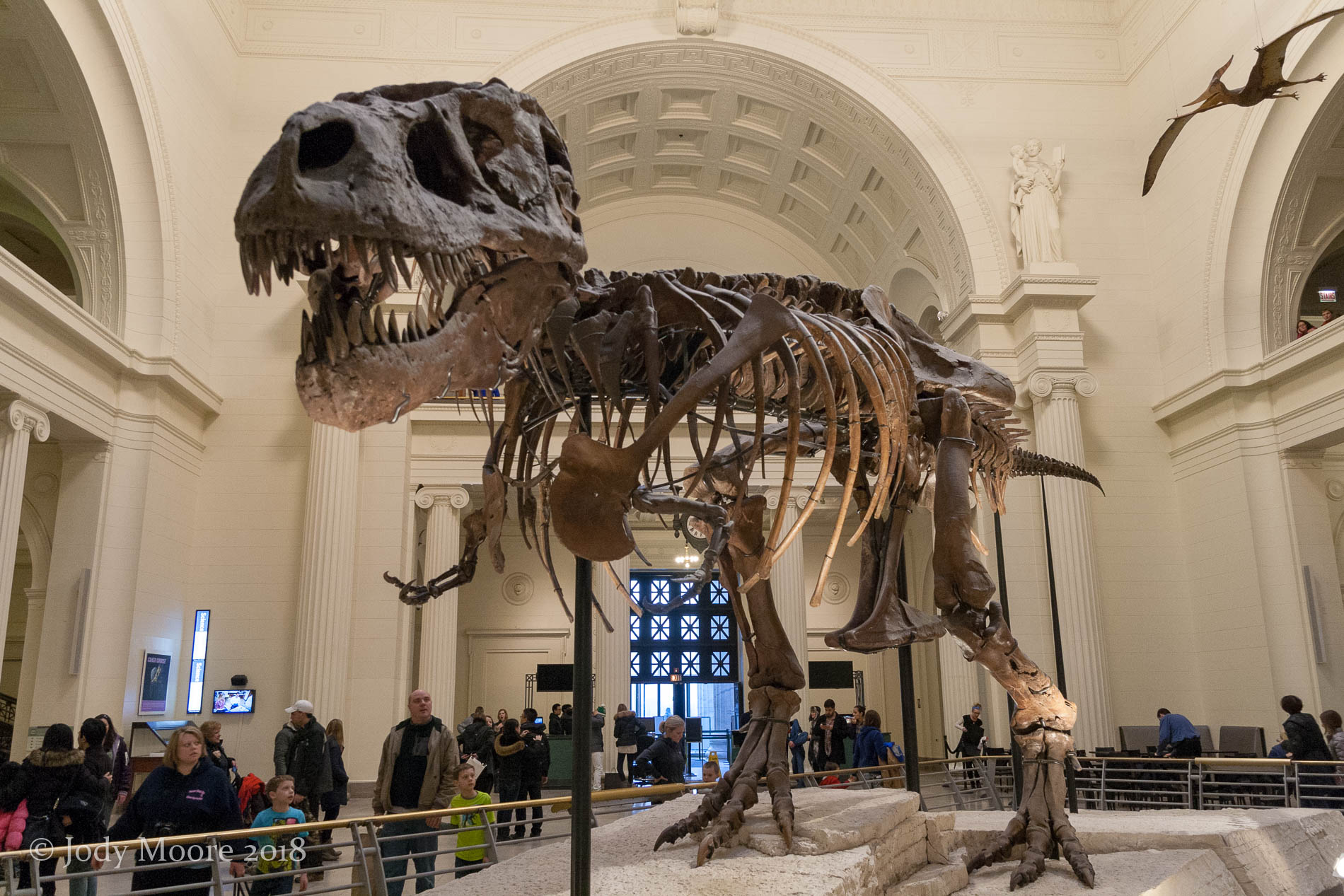 My first visit with Sue, in Feb. 2015 at the Field Museum of Natural History in Chicago.