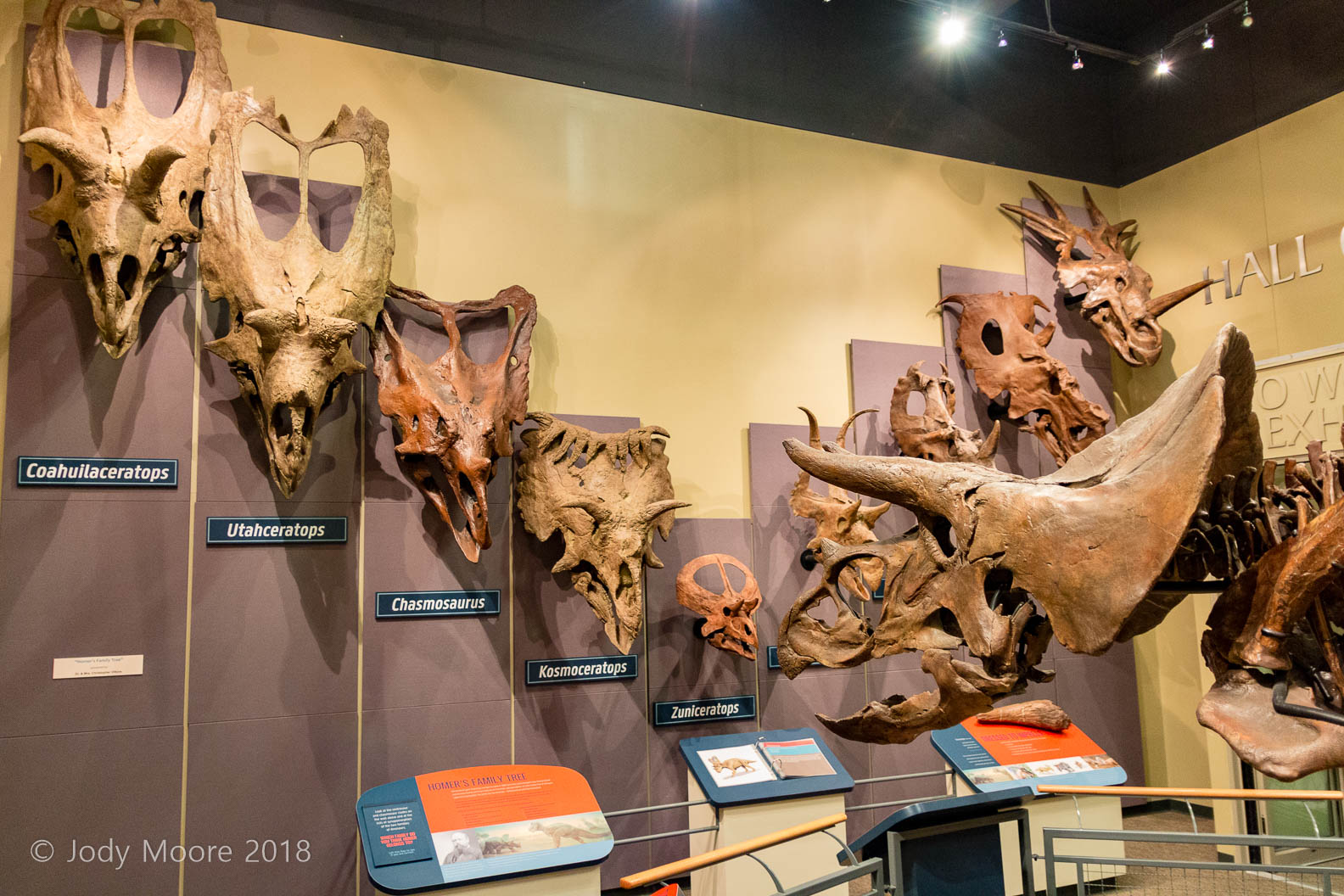 Homer and the skulls of some of his Ceratopsian family members at the Burpee Musuem of Natural History in Rockford, IL.