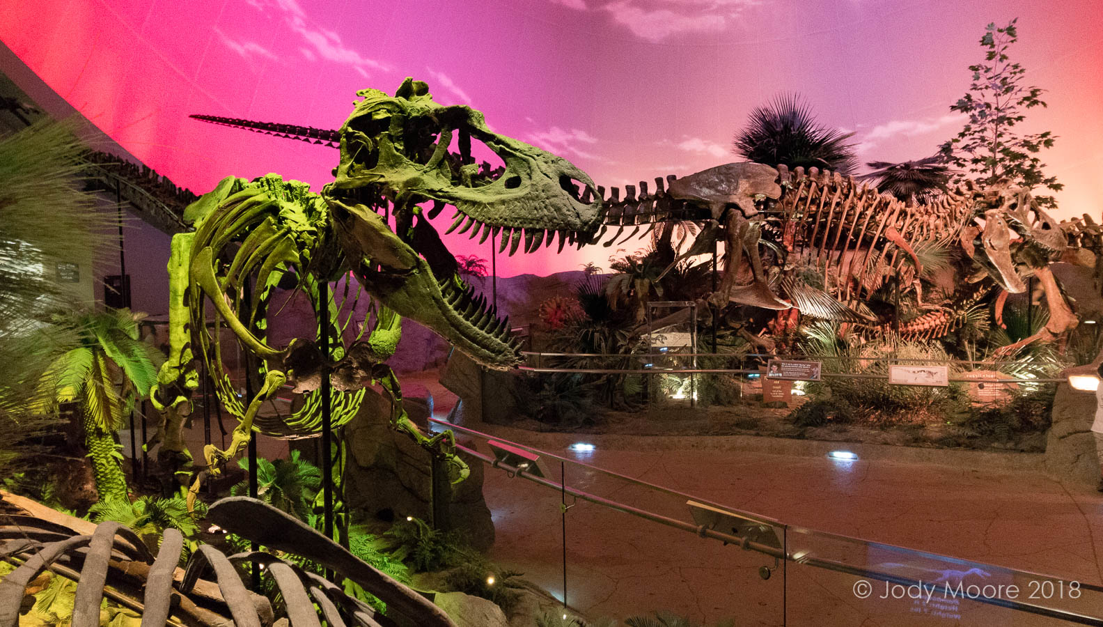 Gorgosaurus libratus specimen TCMI 2001.89.1 shares the Dinosphere with Bucky the T.rex and others at the Indianapolis Children's Museum.