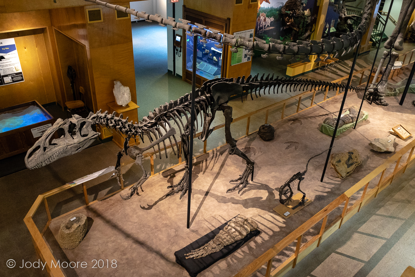 A cast of Museum of the Rockies' Big Al at the University of Wyoming Geological Museum in Laramie, WY.