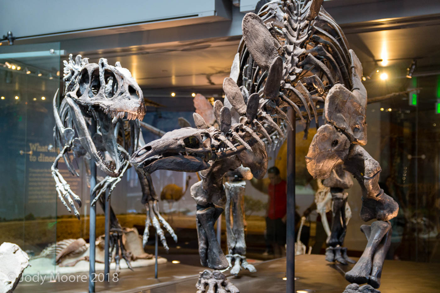 Allosaurus threatens to make a meal of Stegosaurus at the Los Angles County Natural History Musuem.