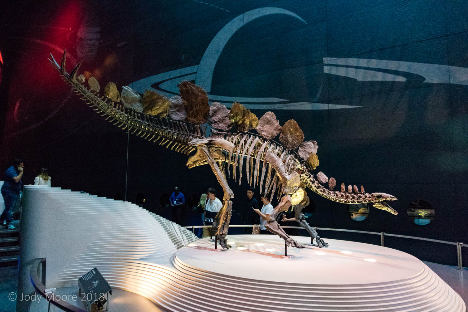 Sophie the Stegosaurus takes center stage at the entrance to the Earth Hall at the British Museum of Natural History in London, UK. Sept. 2017.
