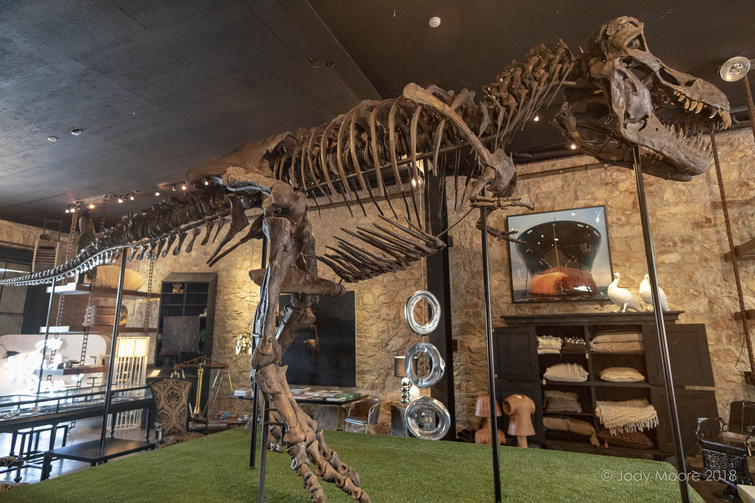 "Theropoda Expeditions' specimen TE-036 ""Roosevelt"" takes center stage at the Erin Martin Design Showroom in St. Helena, CA in the heart of the Napa Valley."
