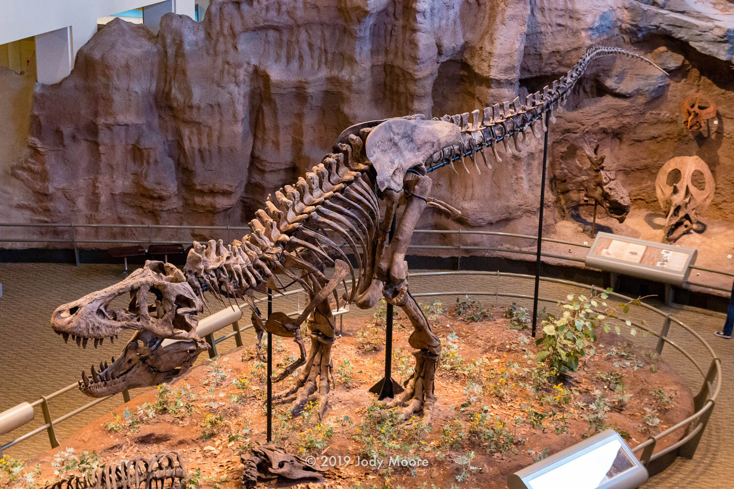 The type specimen for Tyrannosaurus rex is now housed at the Carnegie Museum of Natural History in Pittsburgh, PA.
