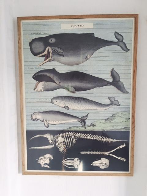 RC - Whales.JPG