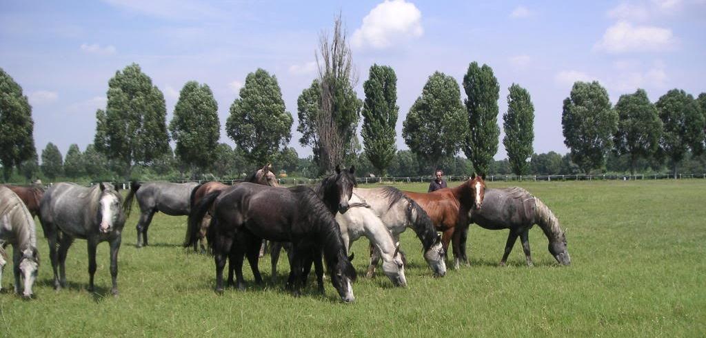 Colts at Babolna Hungary