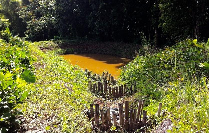 new pond.jpg
