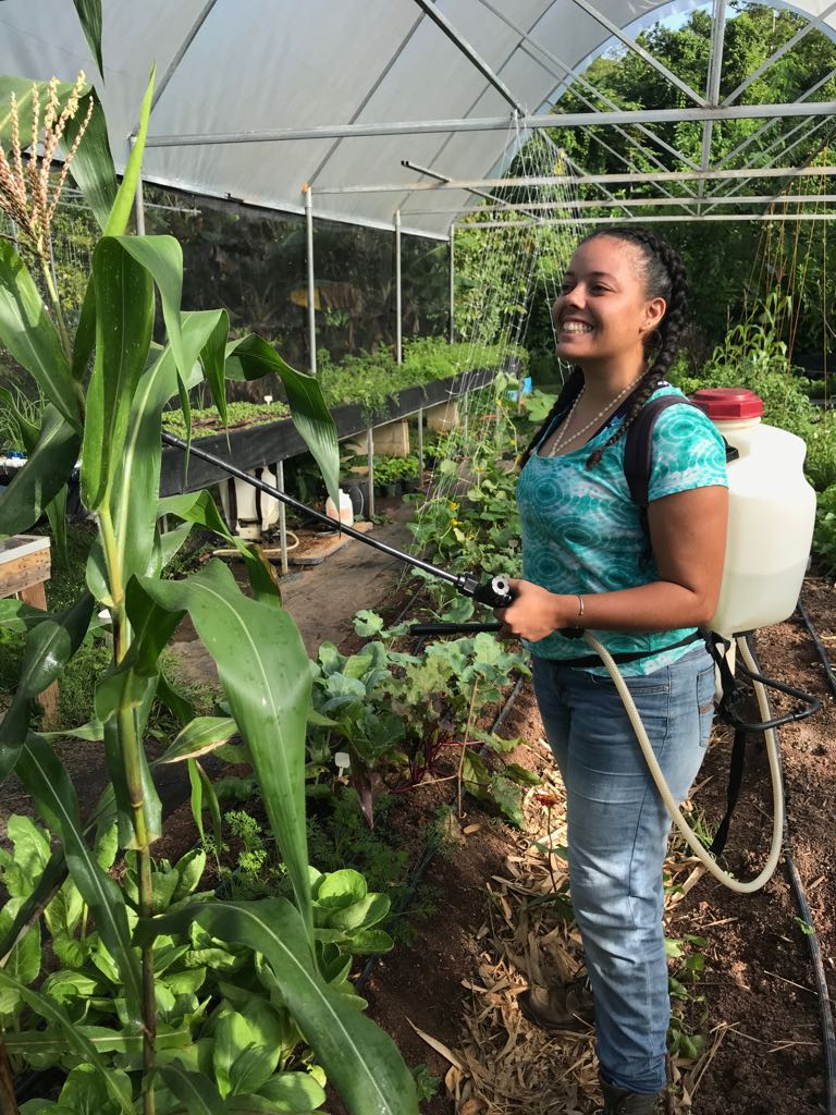 Gabriela spraying compost tea