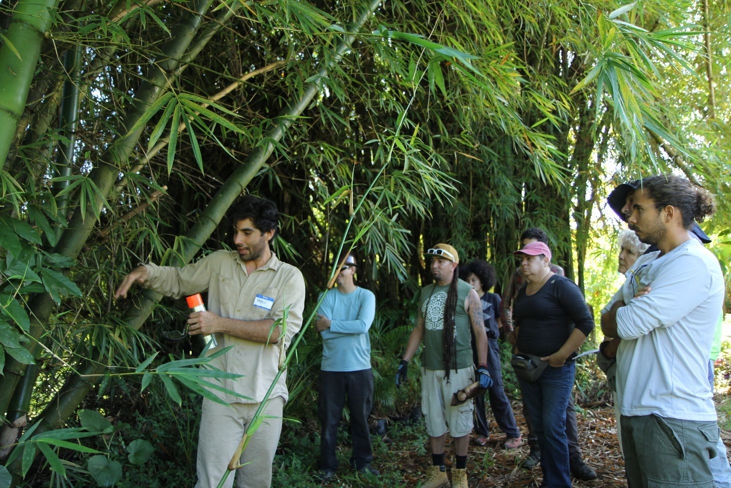 Instructors Pablo Acevedo from Bambú Pueblo and Claudio Maxwell from Memeplex Design teach a group of participants how to identify and harvest bambú for different purposes.
