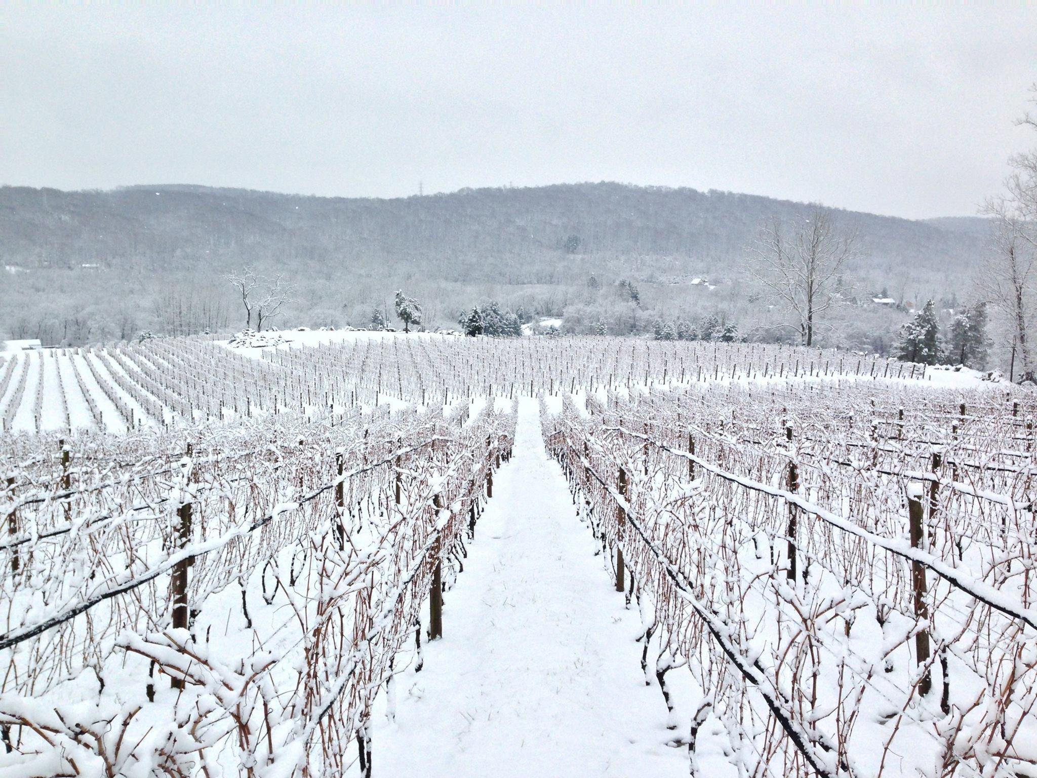 Alba Vineyard & Winery NJ vineyard in winter