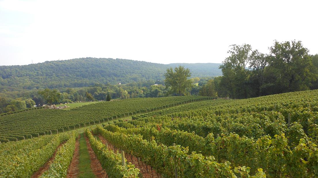 Alba Vineyard Hillside Pinot Noir and Hillside Chardonnay