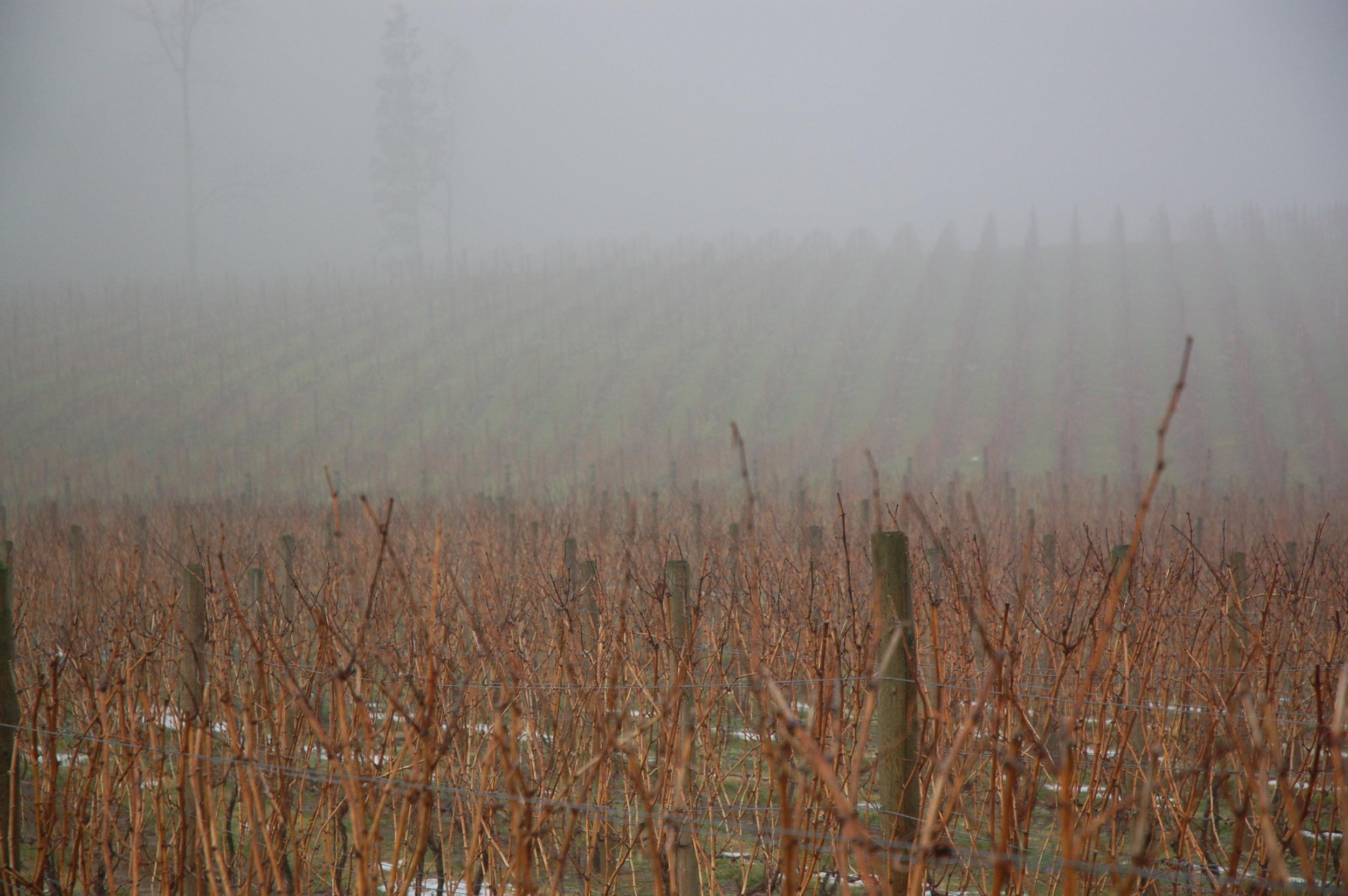Alba Vineyard & Winery- Hillside Pinot Noir, Chardonnay