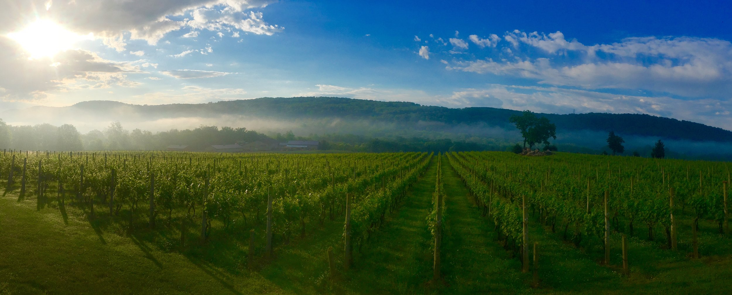 Alba Vineyard & Winery sunrise