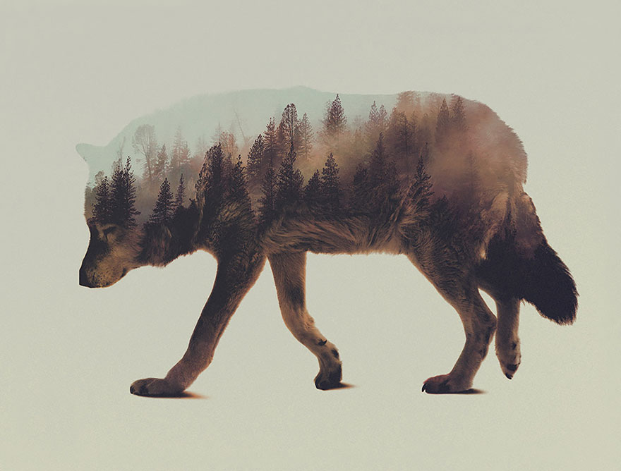 double-exposure-animal-photography-andreas-lie-6__880.jpg
