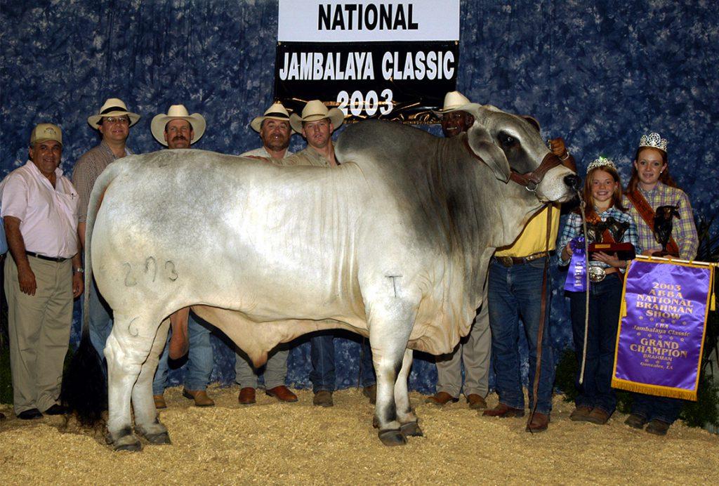 2003 ABBA National Grand Champion  JDH CASSY MANSO 293/6