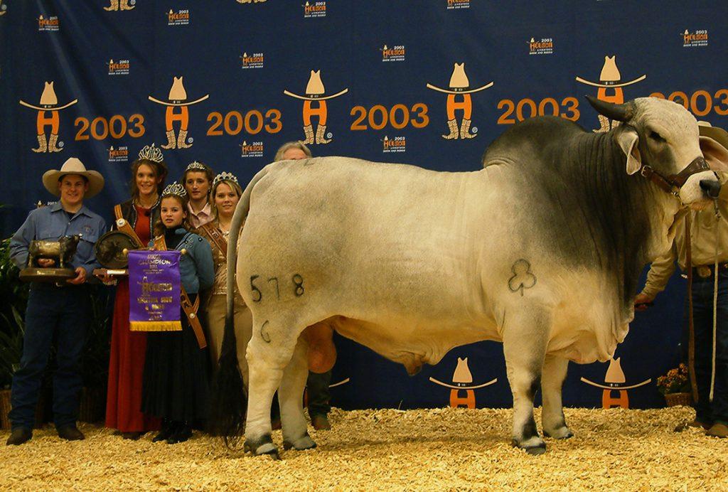 2003 Houston International Grand Champion +JDH MR WOODMAN MANSO 578/6