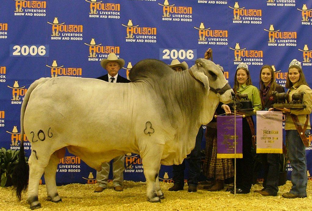 2006 Houston International Reserve Grand Champion +JDH WOODSON DE MANSO 206/7