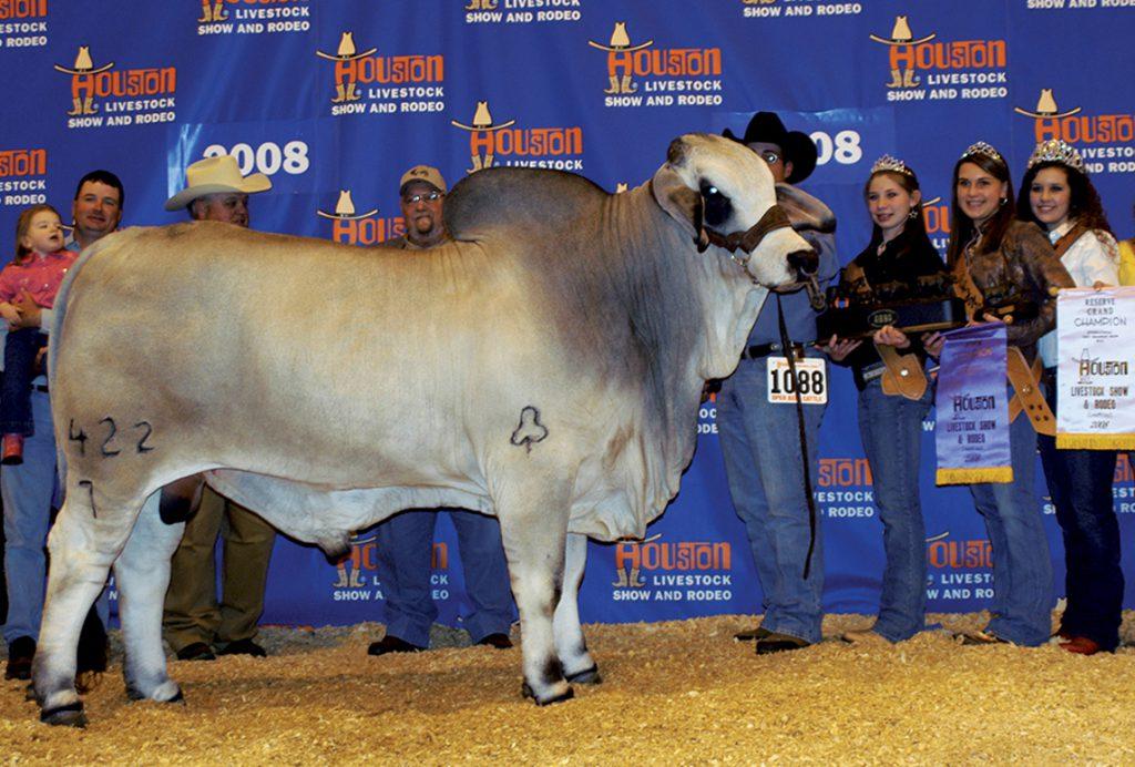 2008 Houston International Reserve Grand Champion JDH BERKMAN MANSO 422/7
