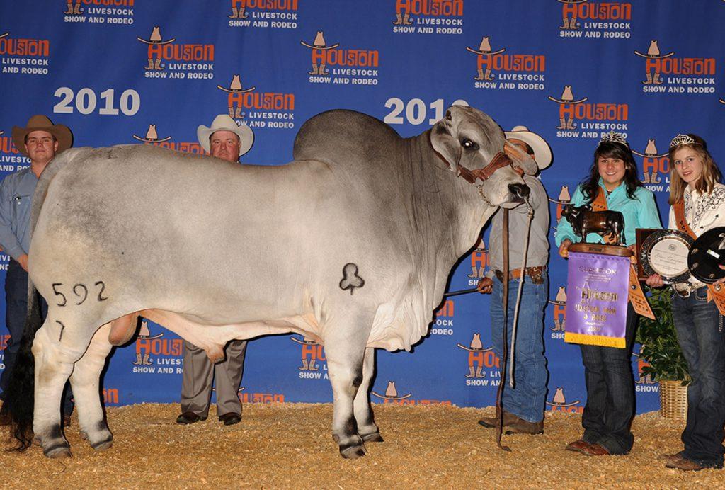 2010 Houston International Grand & Senior Champion JDH DENTON DE MANSO 592/7