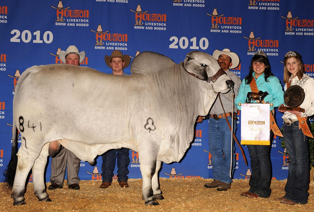 2010 Houston International Reserve Grand & Junior Champion JDH SIR HERMAN MANSO 841/7