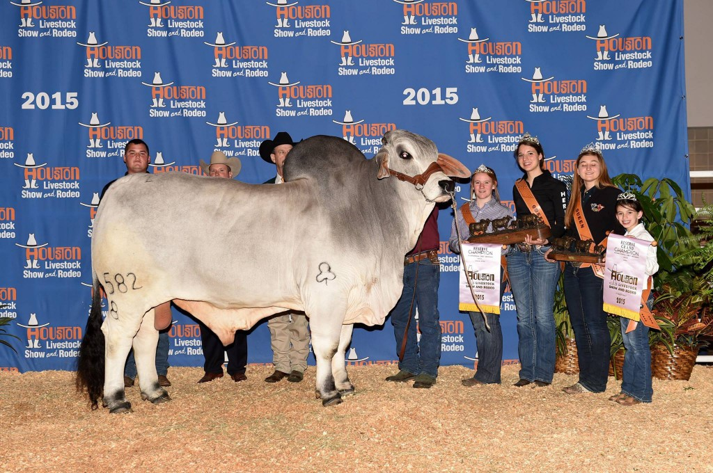 Reserve Grand Champion Bull and Reserve Senior Champion Bull JDH Morgan De Manso 582/8  Sired by JDH Woodson De Manso 206/7