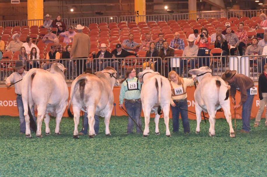 Houston Livestock Show: Class 55 - Gray Get of Sire Champion - J.D. Hudgins, Inc. - Forgason Cattle Co., JDH MR MANSO 638 (ABBA# 889672)