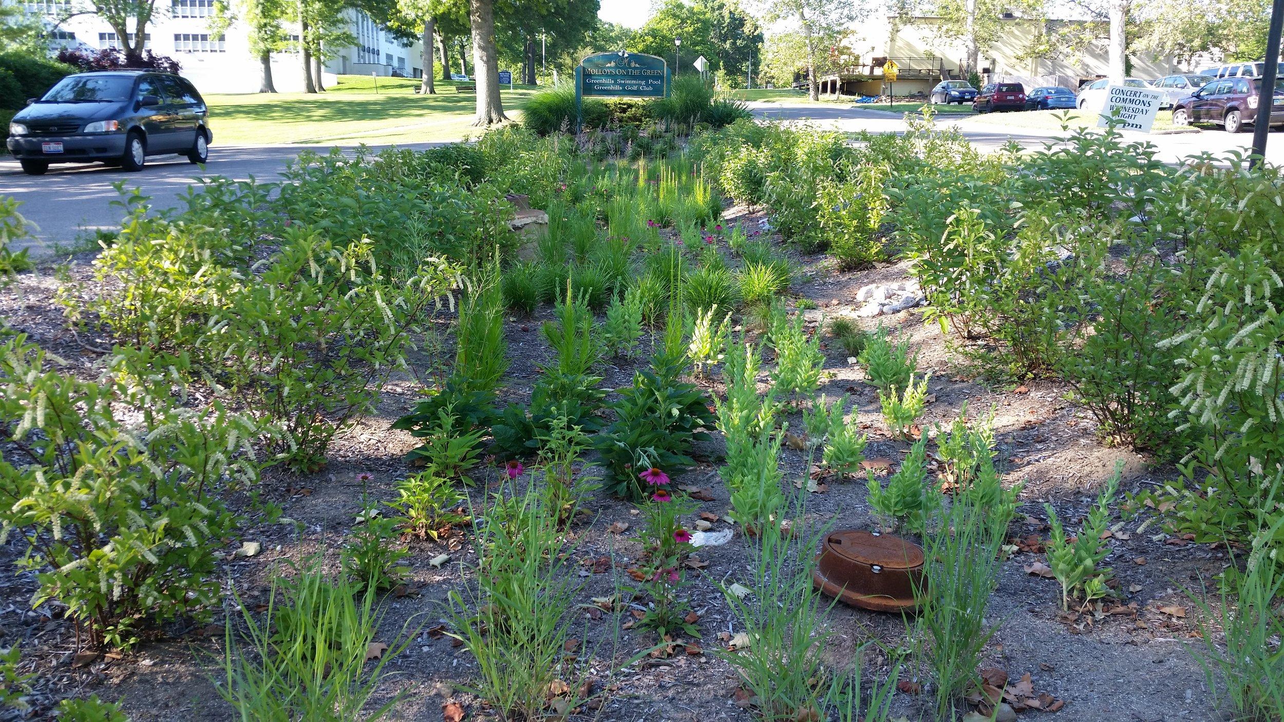 Greenhills Rainwater Harvesting -