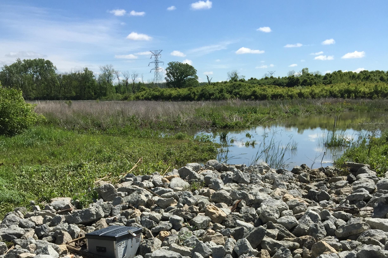 Wildermuth Wetland Restoration -