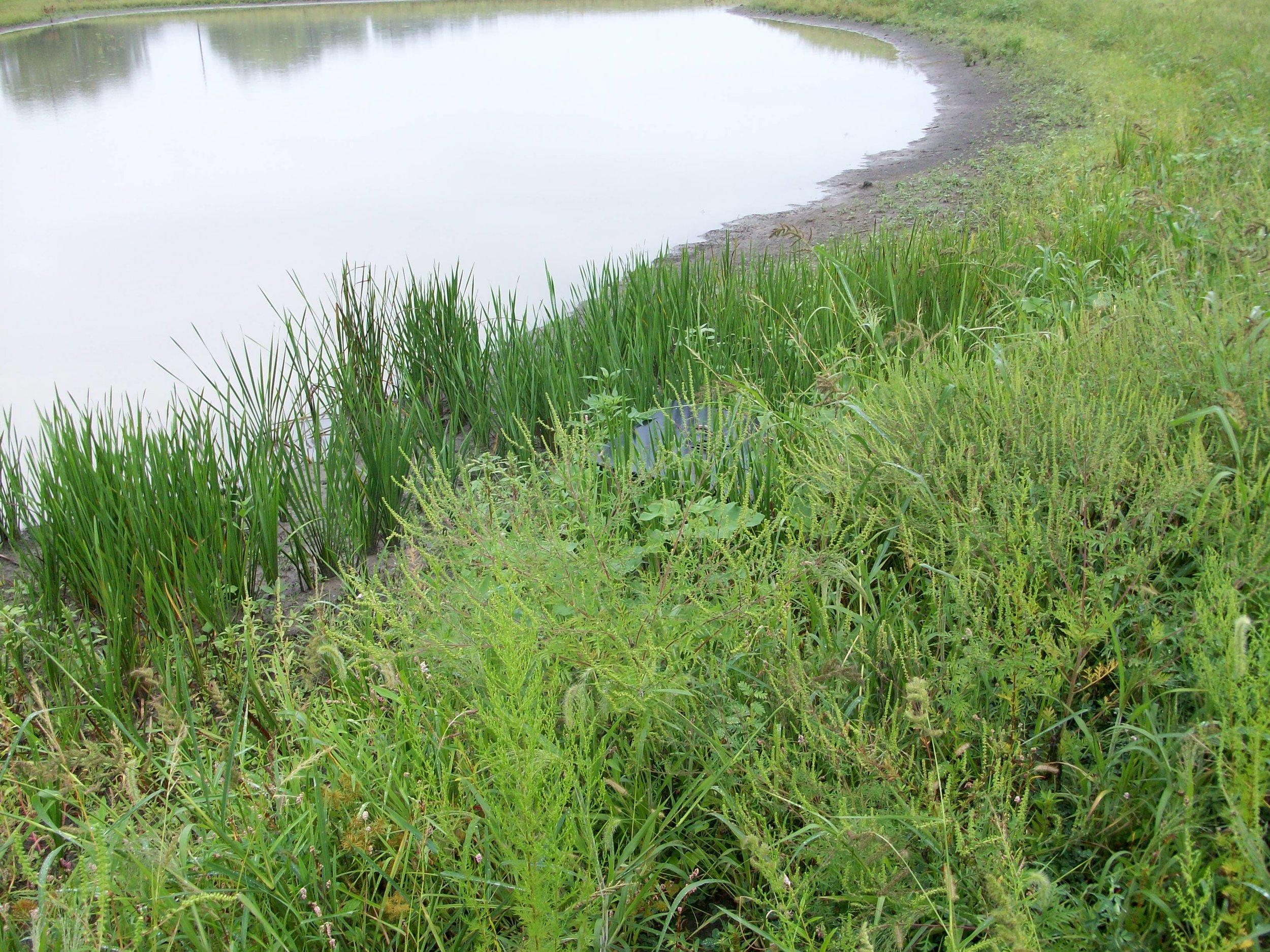 Morris Farm Floodplain Wetland -