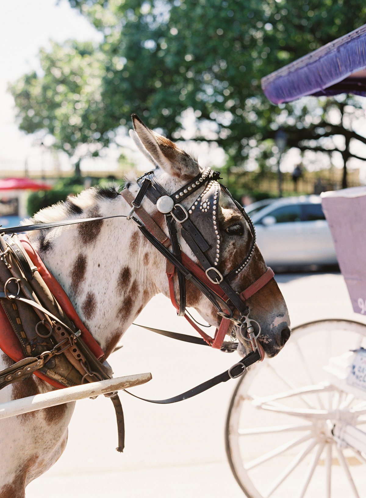 neworleanshorsecarriage.jpg