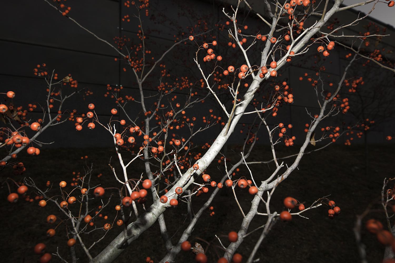 fruit tree .jpg