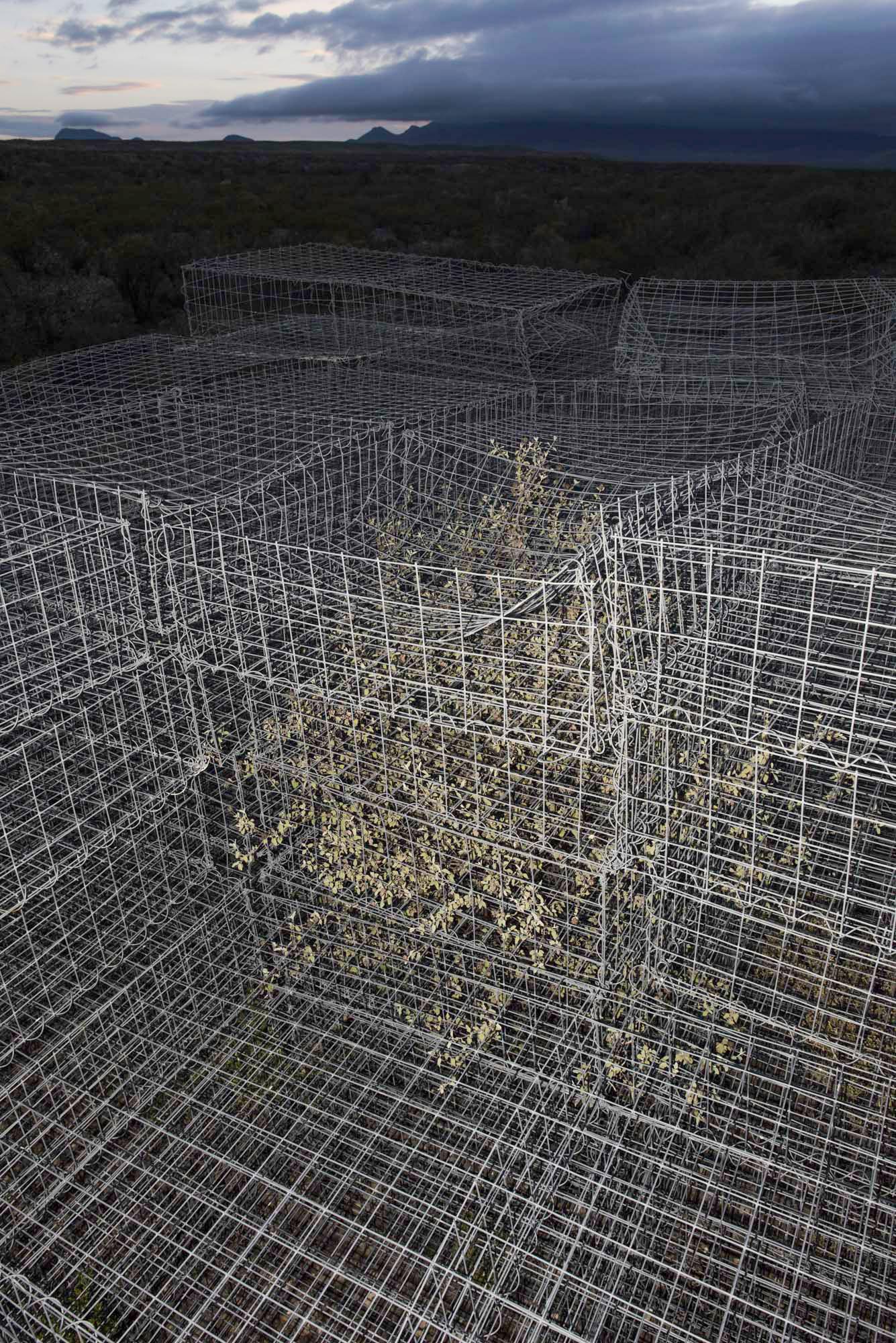 trapped bush web.jpg