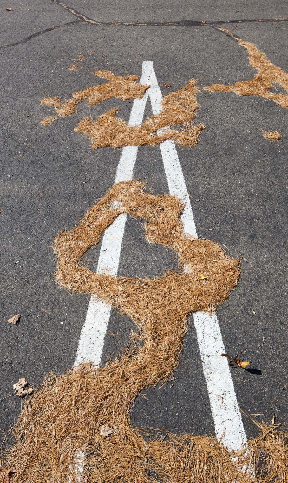 pine needle pavement web.jpg