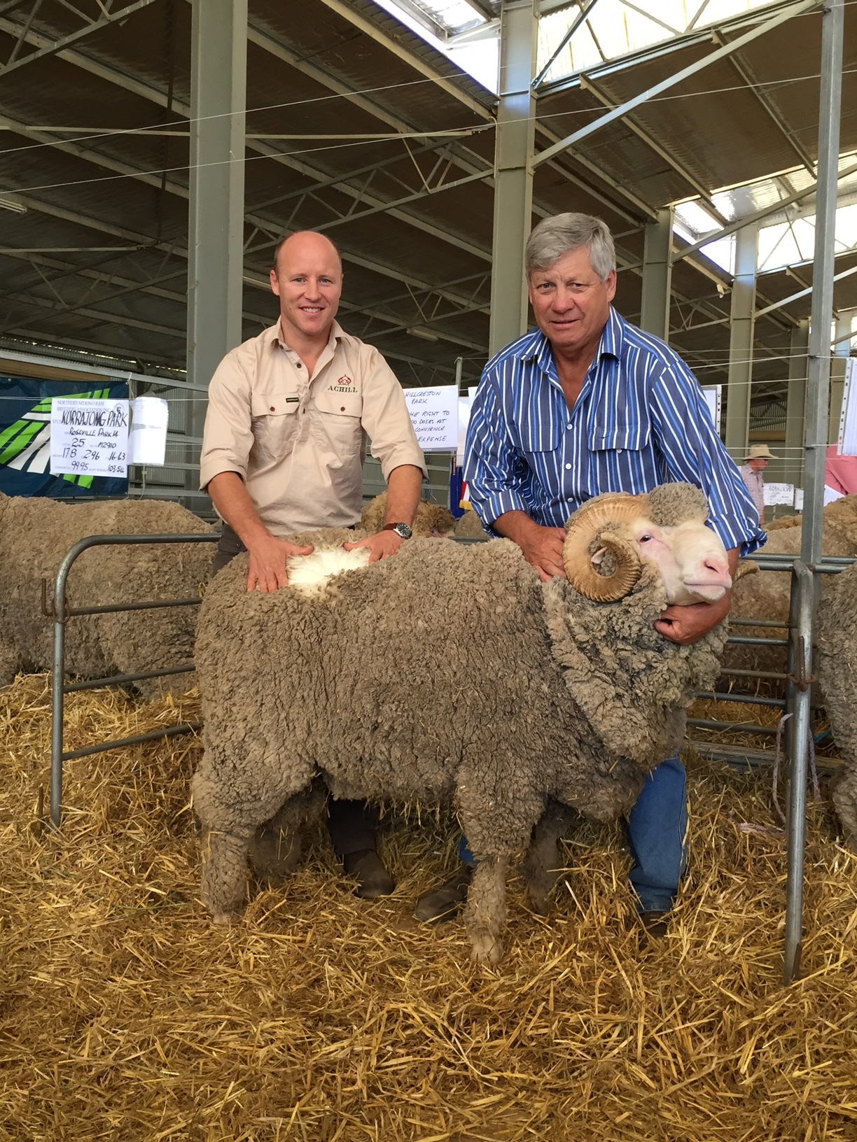 Hillcreston Park sold 16.2 Micron Ultrafine Merino Ram to Charles Coventry Achill Armidale at the Armidale ram sale for $5000
