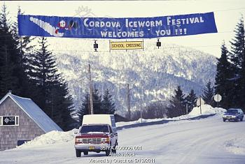 Iceworm_Festival2.jpg