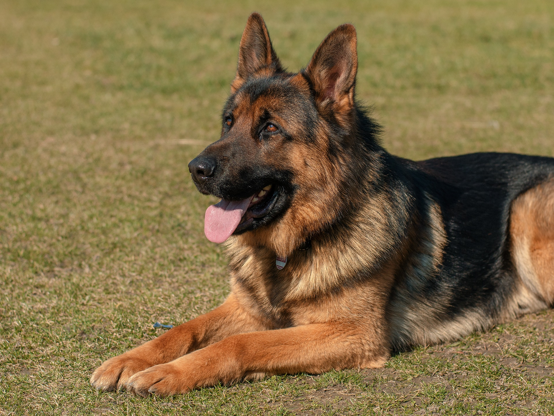 adorable-animal-breed-350428.jpg