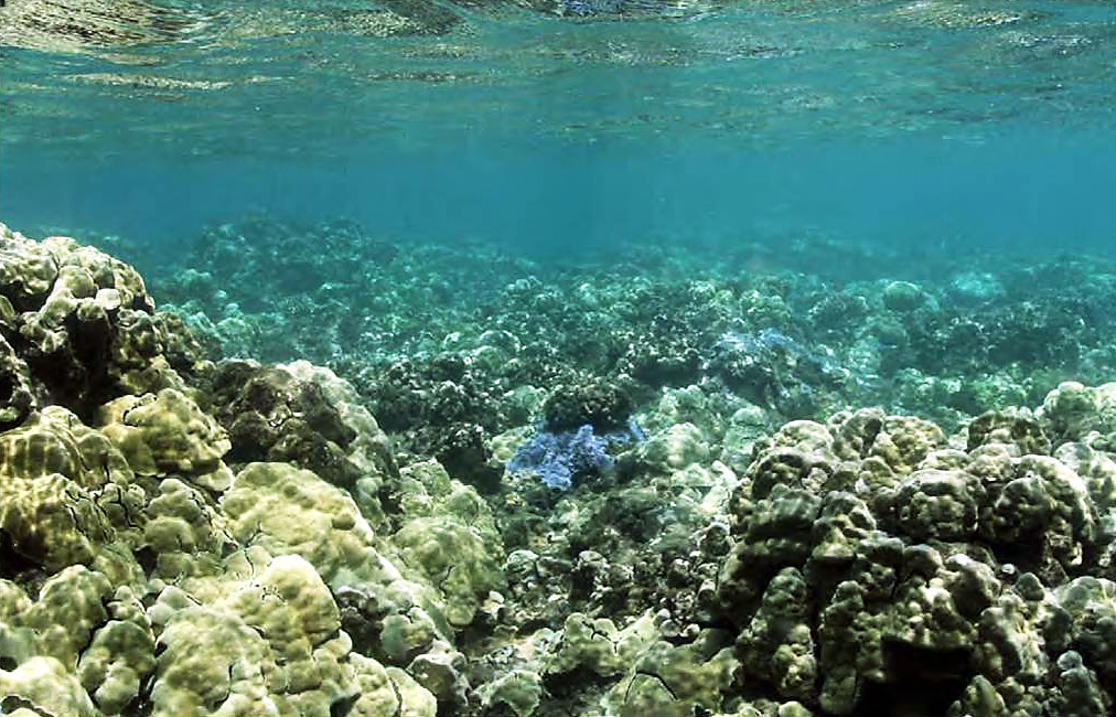 Protect our reefs.jpg