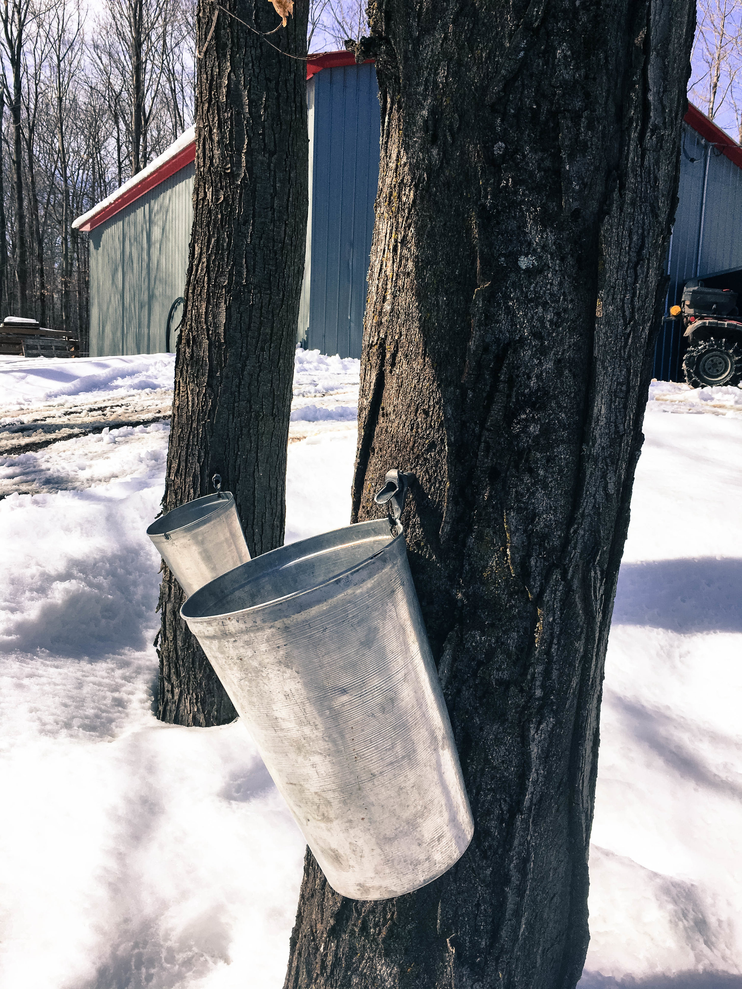 Cabane à sucre. Traditional bucket to collect maple water