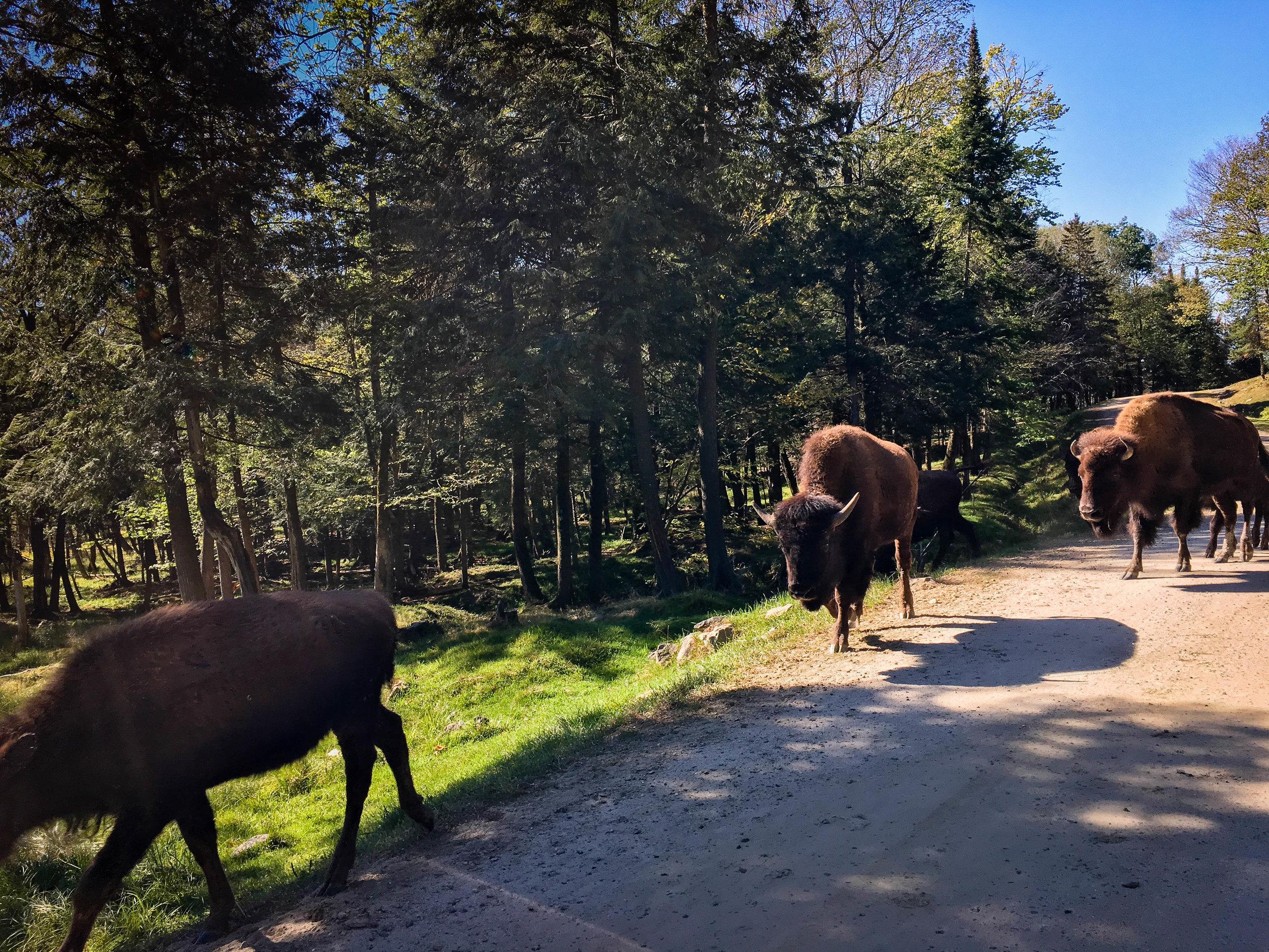 Montebello, Parc Oméga