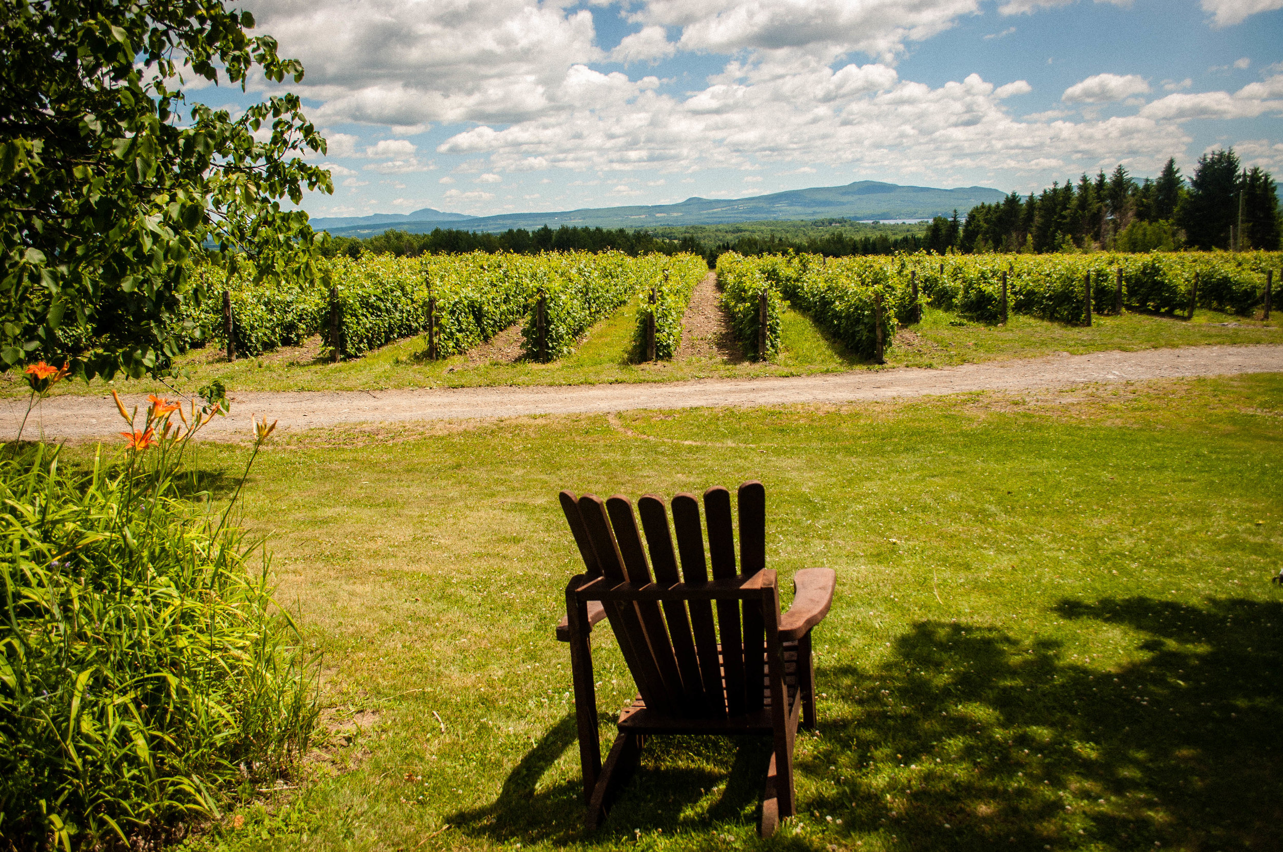 view of Leon Courville, a vineyard near Montreal