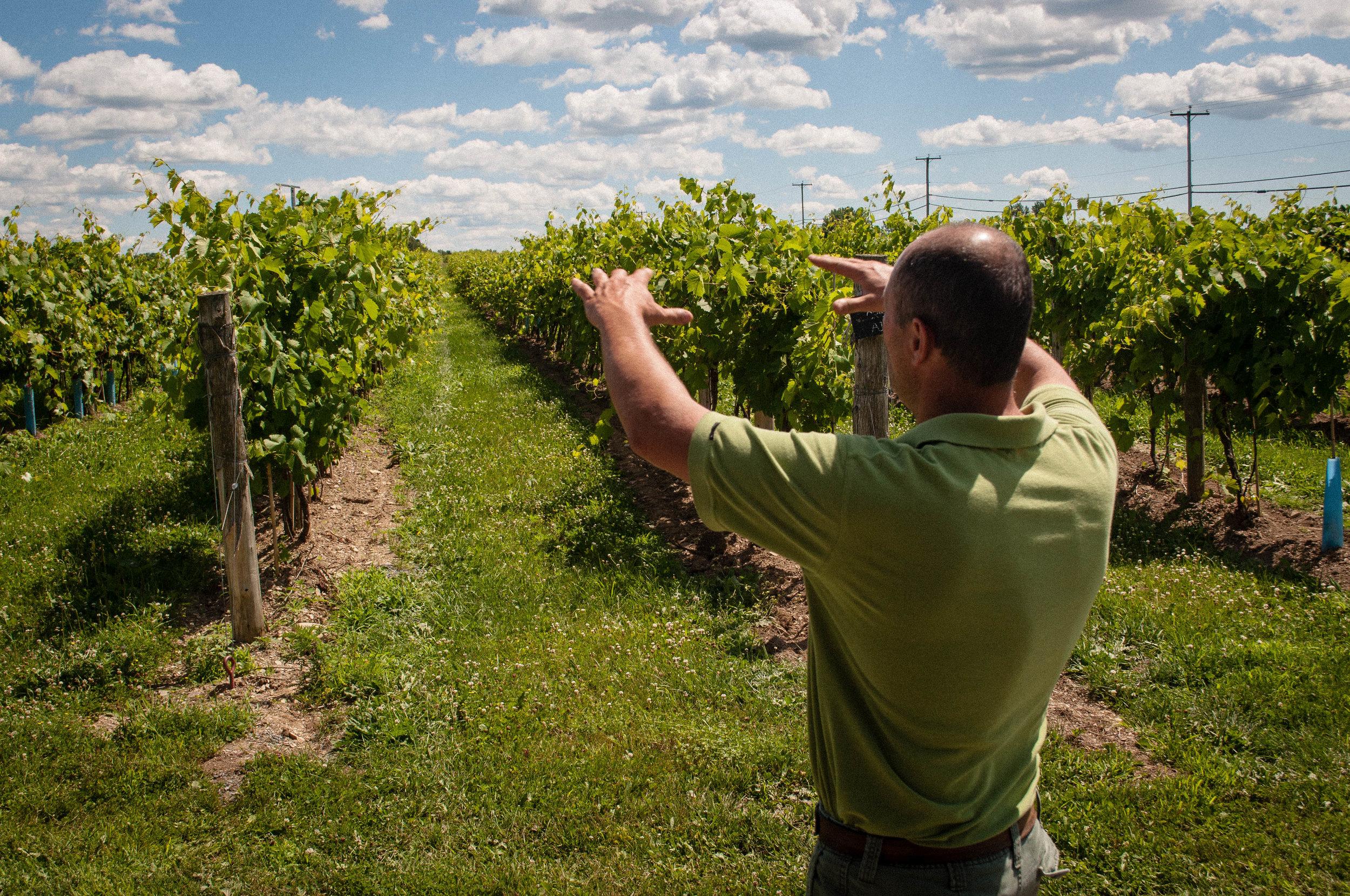 Vignoble La Bauge, a vineyard near Montreal